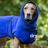 Dryup Cape Blueberry_