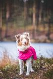 Rukka Pets Hase Raincoat