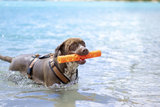 Chuckit Breathe Right Fetch Stick_